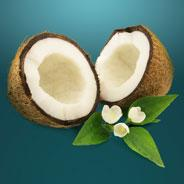 options Hi Res Large Coconut2  Benefits of Coconut Oil for Man's Best Friend