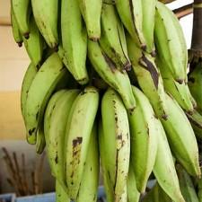plantains060109i 225x225  Kelapo Coconut Oil Plantains