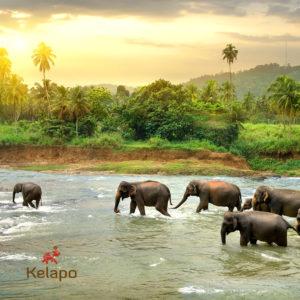 SaveElephantDay 300x300  Save the Elephant Day